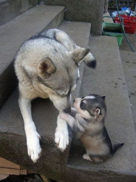 Animal Parents and Kids that Look Totally Alike (34 pics