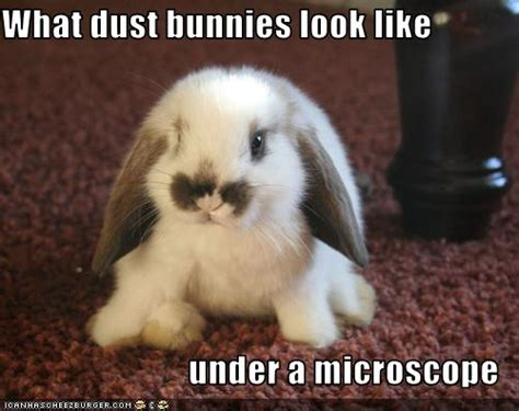 What dust bunnies look like under a microscope