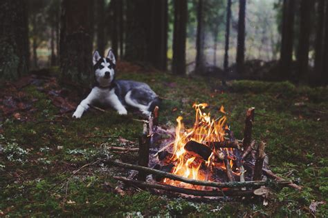 dog forest fireplace Wallpapers HD / Desktop and Mobile