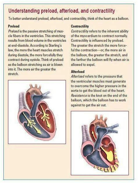 Preload, Afterload, and Contractility | Paramedic school