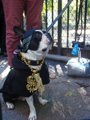 Pictures Of Dogs Wearing Fun Bling: Dog Necklaces & Dog