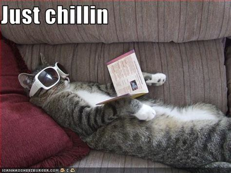 Just chillin - Cheezburger - Funny Memes   Funny Pictures