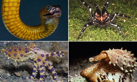 Taipan, funnel-web spider and