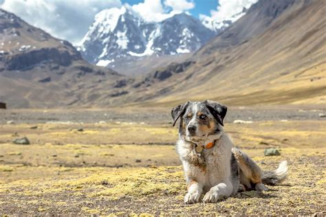 High Altitude: Will it Affect My Dog? - Long Haul Trekkers