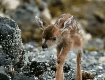 25 of the Most Adorable Animal GIFs