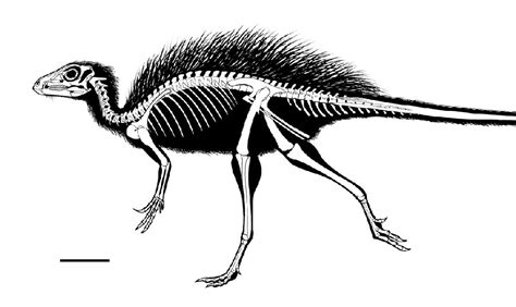 Tianyulong Pictures & Facts - The Dinosaur Database