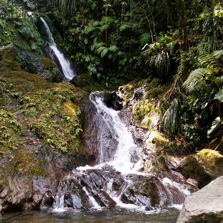 Guadeloupe National Park (Basse-Terre) - 2020 All You Need